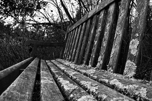 bench lichen cincinnatinaturecenter hollumsphotographynikond90 bwhollumsphotographynikond90