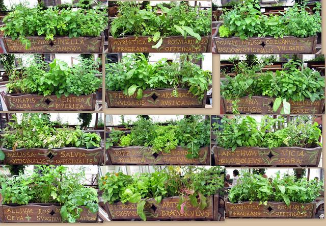 Herbs at Olde Hansa, Tallinn