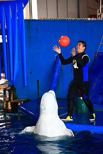 7T18海生館-白鯨-玩球