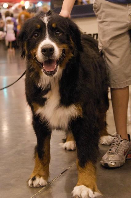Mountain Rescue Dog Harness Uk