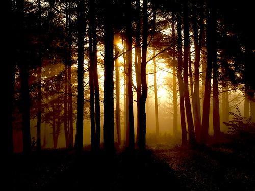 morning trees sun mist tree sunrise landscape flickr puu puud foggymorning päike morningfog hommik udu mistymorning maastik päikesetõus olympuse400 welcometoestonia aplusphoto janne4janne udunepäikesetõus