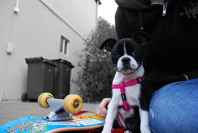 Skater Dog Chillin'