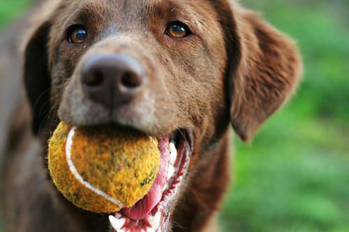 wanna play?!?