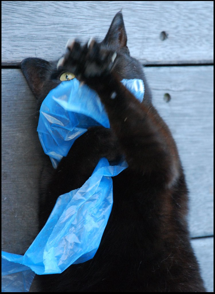 I love it how cats love the cheapest toys (plastic bags, etc.).