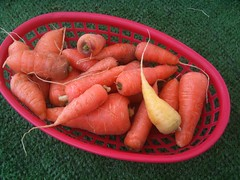 fish(0.0), carrot(1.0), vegetable(1.0), baby carrot(1.0), produce(1.0), food(1.0),