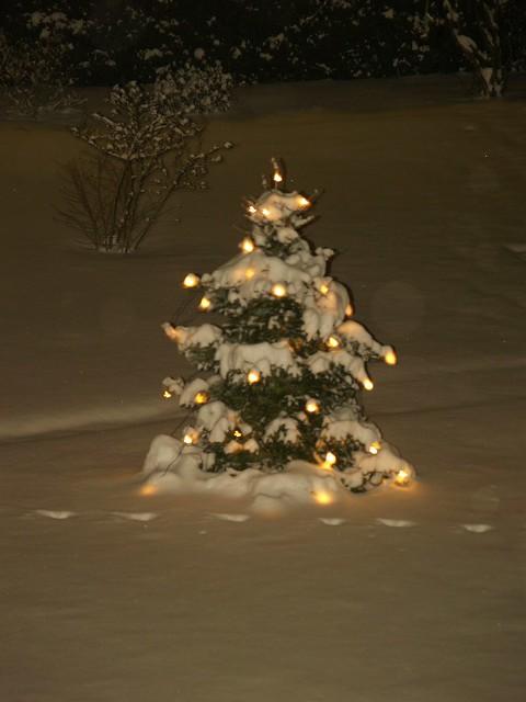 weihnachtsbaum im schnee flickr photo sharing. Black Bedroom Furniture Sets. Home Design Ideas