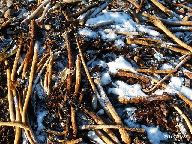 Seaweed & Snow