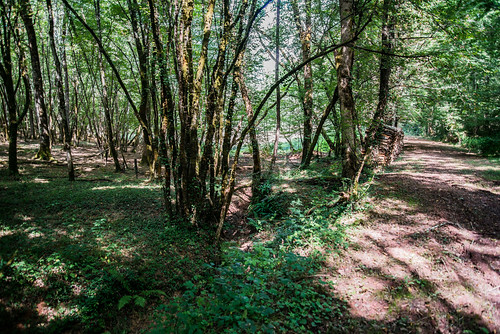 12-Caminot e bosc