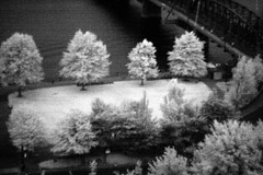 willamette, infrared