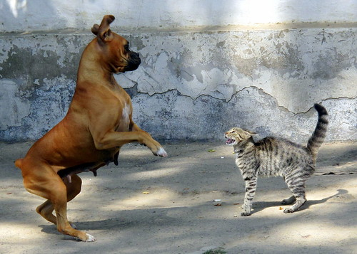 scared dog and cat hiss