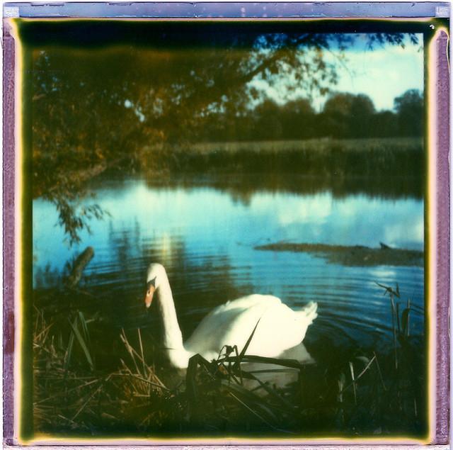 Swan River SX-70