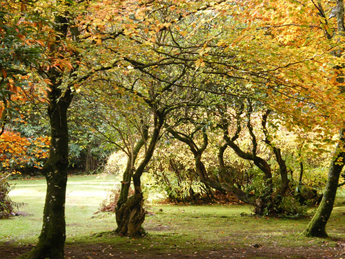 Autumnal trees in the grounds of Shambellie House