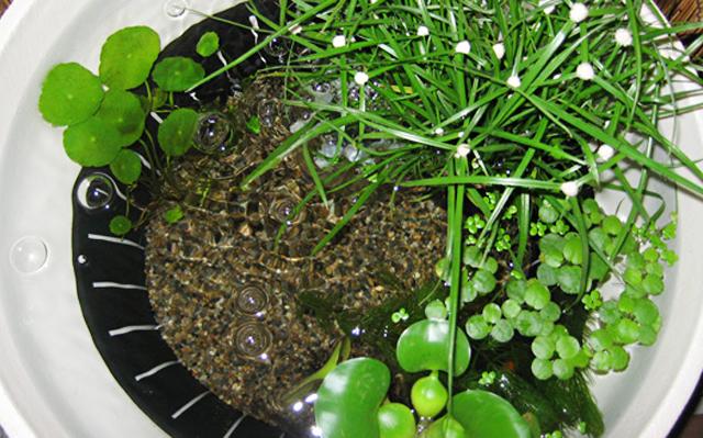 640x399 水生植物 ユキボウズ