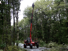 logging(1.0), trail(1.0), vehicle(1.0), tree(1.0), forest(1.0),