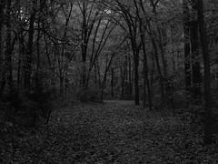 Dark Fall Forest