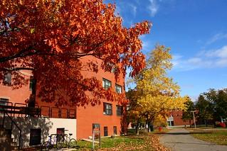 UPEI in the Autumn