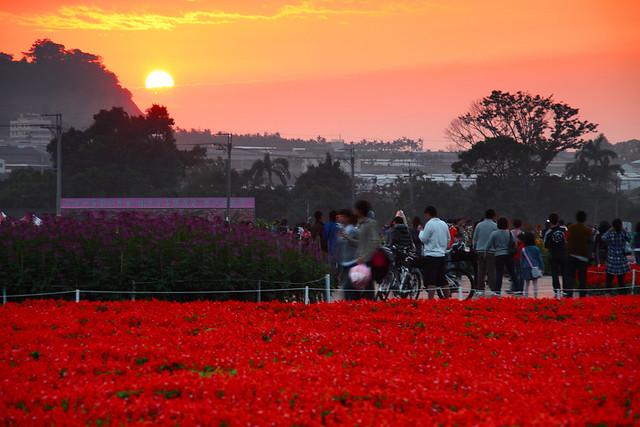 花海与夕阳