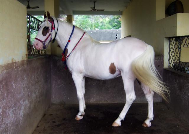 Guru Gobind Singh on Horse Guru Gobind Singh ji 39 s Horse