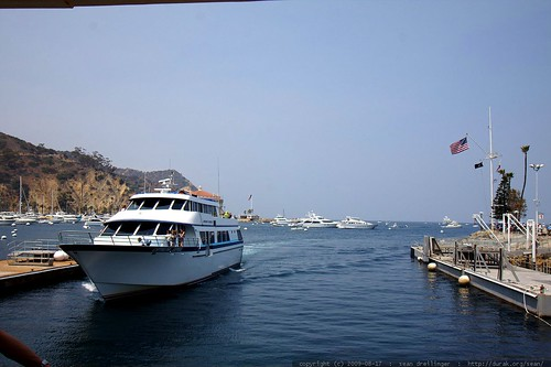catalina  > dana point ferry    MG 3368