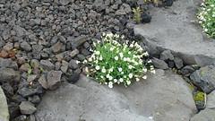 Ισλανδία 212