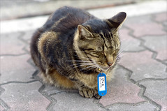 "The Suma Station Cat named ""Peace"""