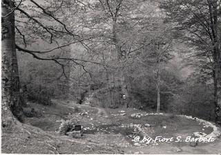 Pietrastornina (AV), 1963, Località Acqua delle Vene: la sorgente.