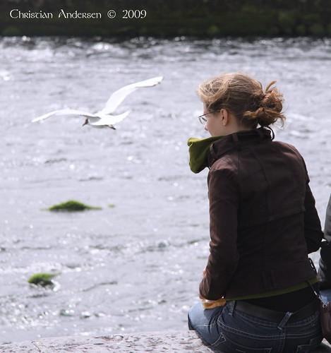 ireland galway water flying seagull 2009 rivercorrib underthebigsky irelandinmyheart artofimages vigilantphotographersunite vpu2 vpu3 vpu4 vpu5 vpu6 vpu7 vpu8 vpu9