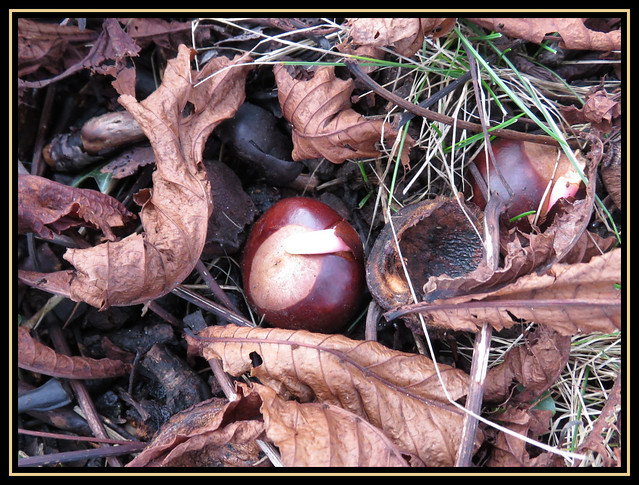 Conker The Earth
