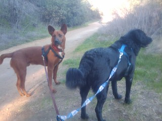 Hiking with the dogs