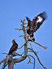 et_kotkat_7809 by Finnature Bird Photography - Nature Photography