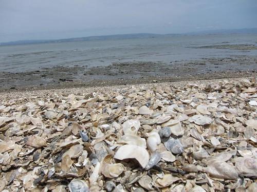 Shell Beach IMG_5926