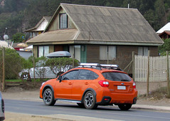 Very orange XV
