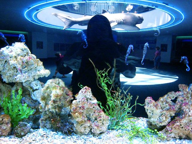 Moody Gardens Aquarium July 10 2009 Flickr Photo