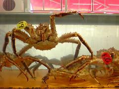 dungeness crab(0.0), food(0.0), american lobster(0.0), crab(1.0), animal(1.0), crustacean(1.0), seafood(1.0), invertebrate(1.0), king crab(1.0), fauna(1.0),