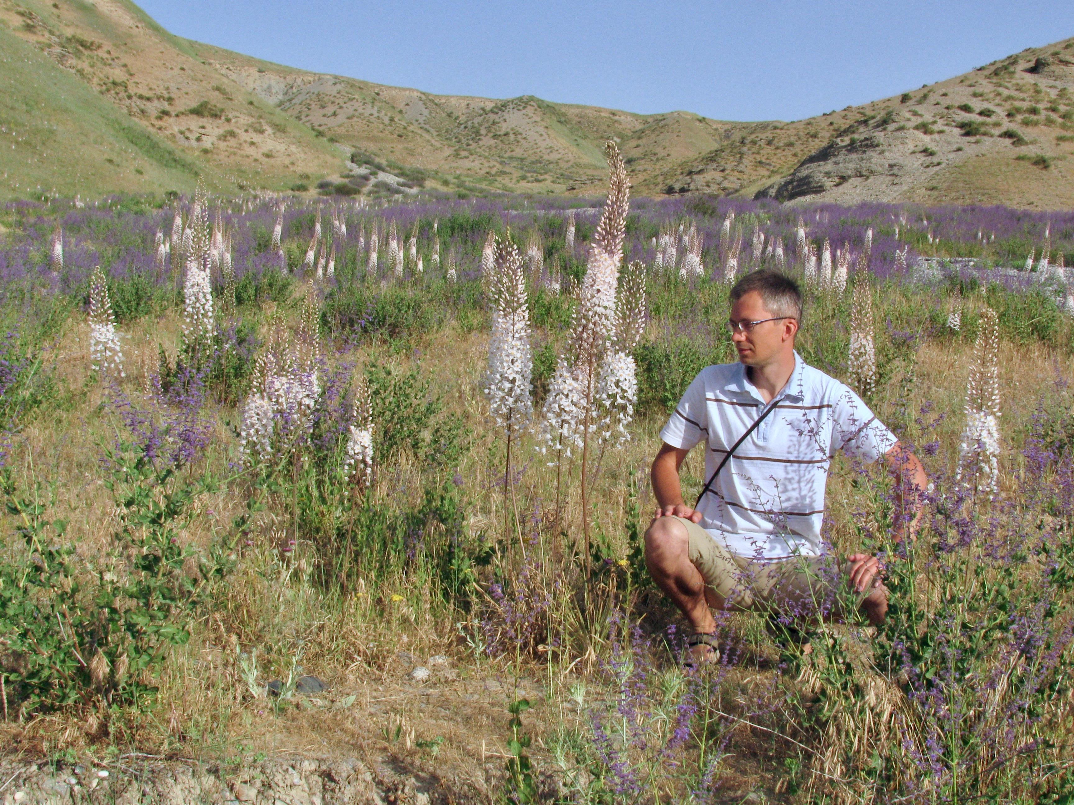 Eremurus tianschanicus, Perovskia scrophulariifolia (lilac) and me