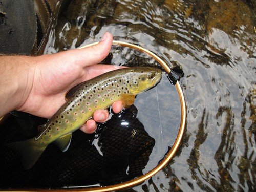 Fly fishing maryland in august backwater angler for Trout fishing maryland