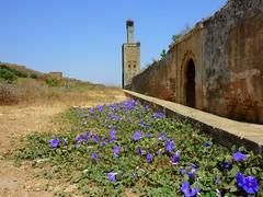 Morocco /   المغرب