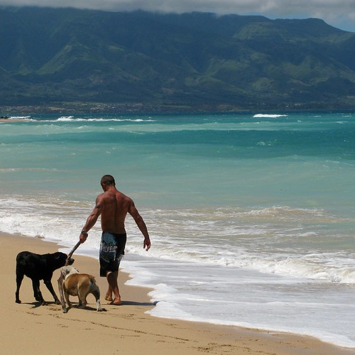 Taking the dogs for a walk on the beach is a common chore in some parts of Maui.