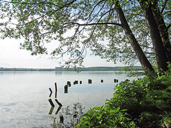 Tollensesee
