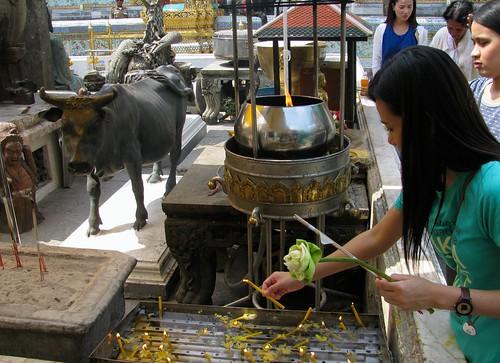 Devoción budista