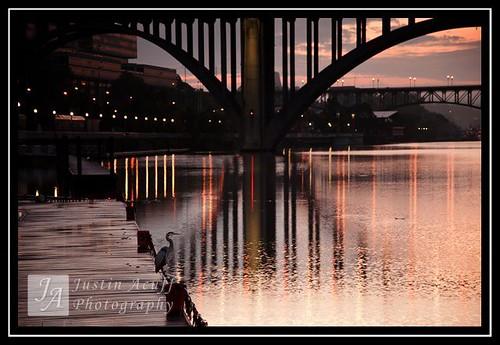 sunrise knoxville greatblueheron knoxvilleriverwalk