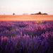 Provence by oursde