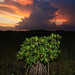 everglades national park, thunderstorm and sunset, miami-dade county, florida 4