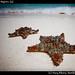 Starfish, Isla Mujeres (4)
