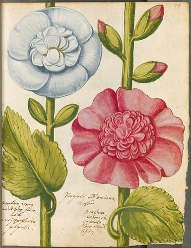 bibliodyssey  hortulus monheimensis