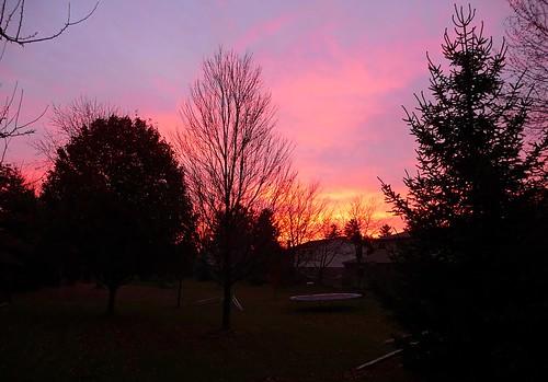 sky tree silhouette sunrise michigan 2009