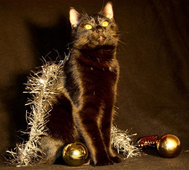 gobbolino  the christmas king