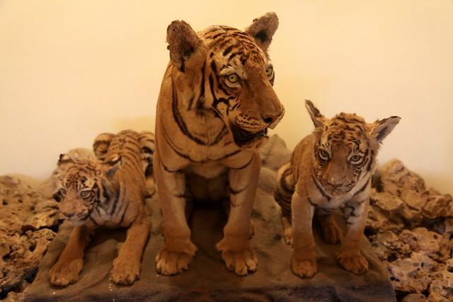 maharao raja bahadur singh museum