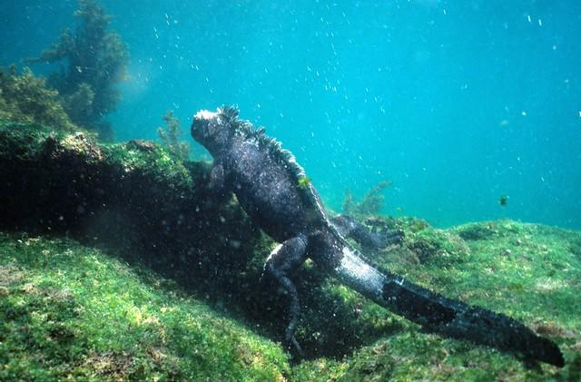 Www Galapagos Travel