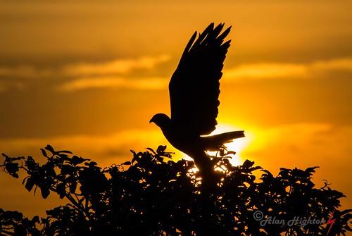 alanhighton venezuela wildlife ¨los llanos¨venezuela ¨alan highton¨